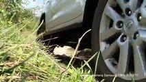 Beginner Off Roading Land Cruiser, 80 Series  - video