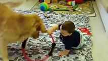 Baby and Pets  Funny and Cute Babies With Pets Part 1 Funny Pets