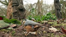 Entertainment for Cats : Birds and Squirrels in The Woodland Garden