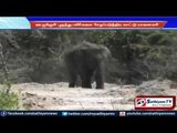Wild elephant entered the village and damaged crops