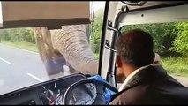 Un éléphant malin  prend sa commission dans un bus