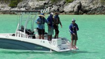 Fly Fishing for Sharks in the Bahamas