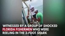 500-Pound Goliath Grouper Devours Shark In Front Of Shocked Florida Fisherman