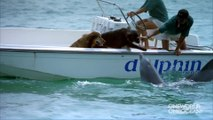 Ce dauphin vient faire des bisous à un chien... Adorable