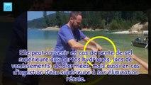 BAIGNADES DES CHIENS : Un chien de 2 ans est empoisonné par l'eau - France 365