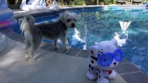 DCTC Puppy Dog Zumi Swimming with Toy Dog _ Little Tikes Swim To Me Puppy with DCTC Amy Jo and Zumi