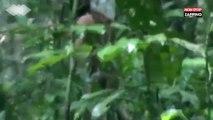 Brésil : Depuis 22 ans, cet homme vit seul dans la forêt amazonienne (Vidéo)