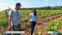 Vin : les vignes françaises malades
