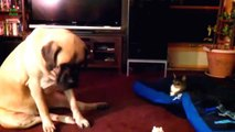 Best Funny Cats and Dogs Cute - Videos ! Funny video / You will Die Laughing lol