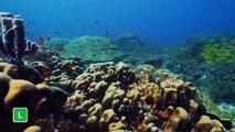 As canções do peixe palhaço | Planeta Azul II | Discovery Brasil