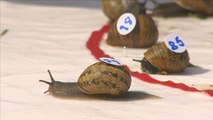 Ready, steady, slow — snails slug it out at racing world championships