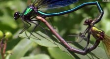 Life in the Undergrowth S01 - Ep02 Taking to the Air - Part 01 HD Watch