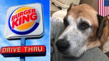 Burger King offers terminally ill dog cheeseburgers for life