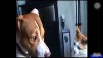 CATS TERMINATING DOGS || CATS VS DOG  || CATS AND DOG FIGHT