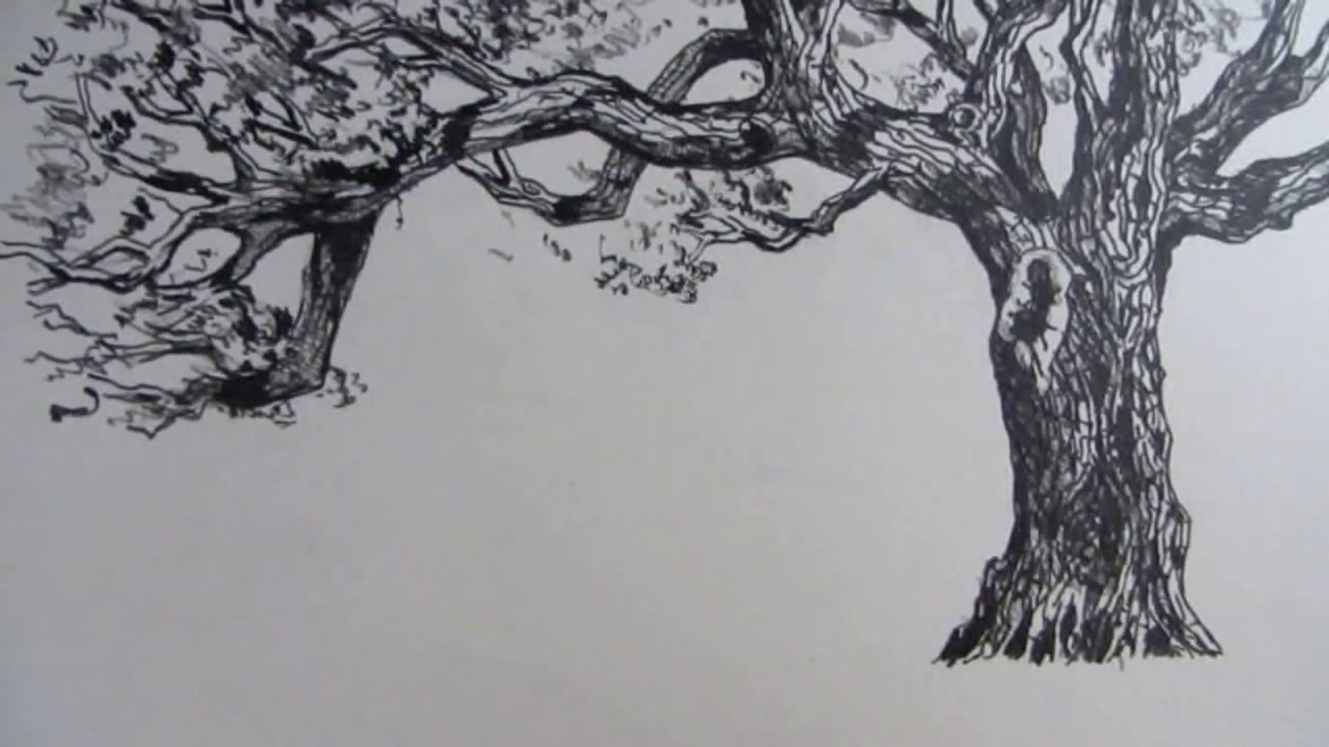 Comment Dessiner Un Arbre Raconte Etape Par Etape Video Dailymotion