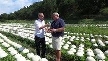 Alpes-de-Haute-Provence : Mais à quoi servent donc ces milliers de cloches installés sur les salades entre Mane et Forcalquier ?