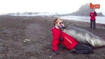 Ce bébé éléphant de mer est très câlin... Gros bisous