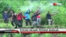 Gerebek 6,5 Hektar Ladang Ganja , Polisi Lepaskan Tembakan