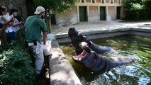 Animals at Rome zoo receive frozen food to fight the heat