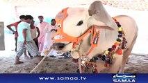 Faisalabad Mein Bhi Bakra Eid Ki Dhoom   SAMAA TV  