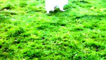 Puppies Kelly Samoyed & Lexi Labrador just want to investigate.