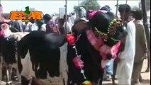 Bakra Eid 1 Funny Tezabi Totay Punjabi Totay pakistani eid and indian eid Muslim eid videos