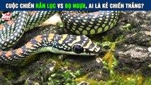 Cuộc chiến không cân sức giữa rắn lục và bọ ngựa, ai là kẻ chiến thắng
