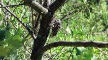 Alpes-de-Haute-Provence : Pourquoi entendez-vous les cigales ?