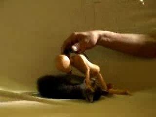 Combat marionnette VS vrai chaton