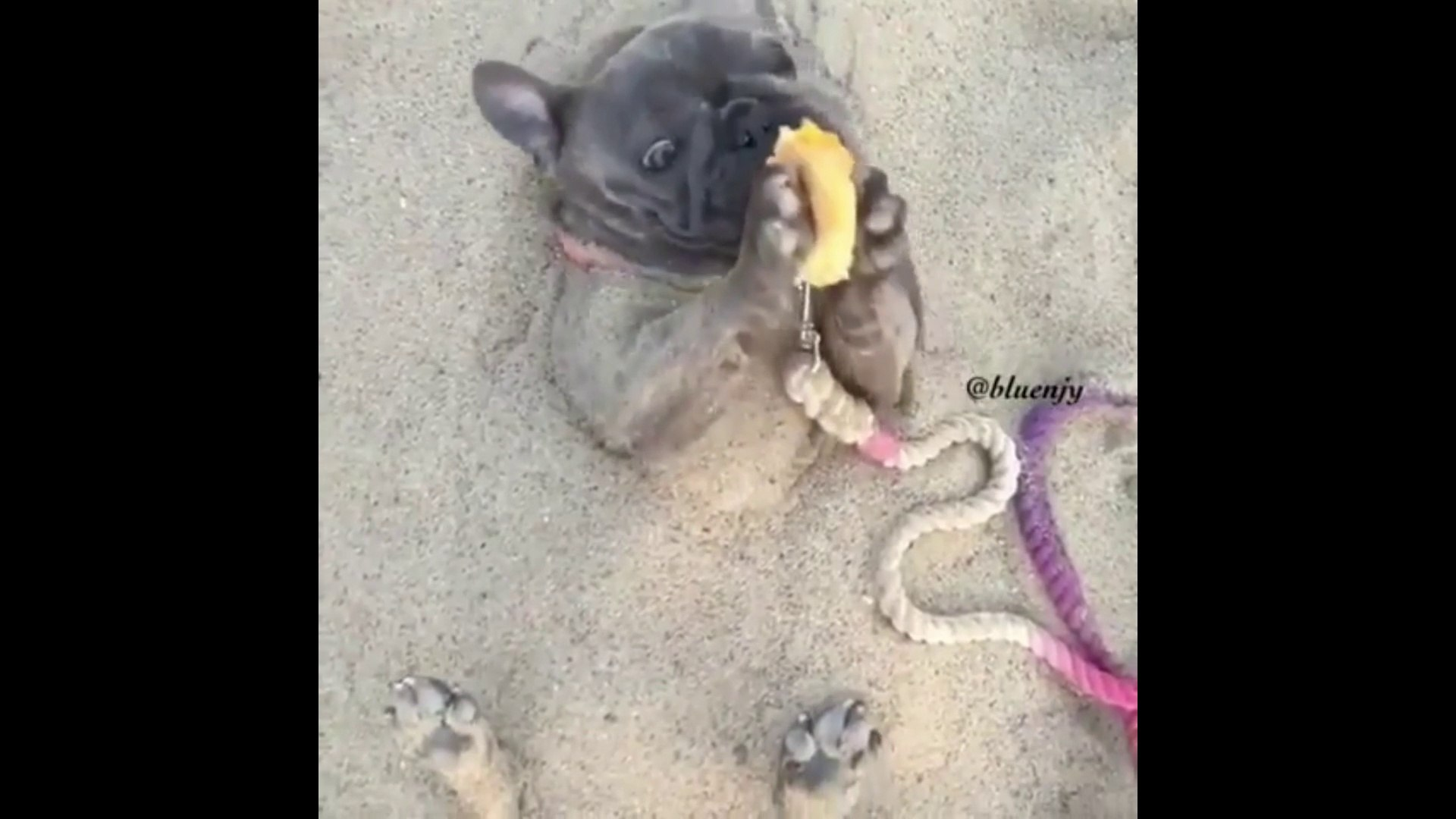 Food Funny Dogs||Funny Food Dogs Video 2018