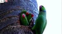 newborn parrot food / newborn baby parrot / newborn baby parrots/ killi