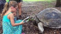 Miami Zoo : Nourrir les tortues/Feeding turtles