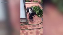 Cats and Dogs  Funny Cats and Dog Playing Together Part 1 Funny Pets