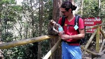 Adorable moment tourist gives thirsty baby monkey a drink