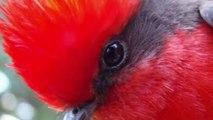 Loài Chim Nhỏ Thông Minh Làm Tổ Nguỵ Trang Trên Cành Cây To