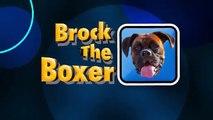 SLIP N SLIDE BOXERS ON POOL COVER!! (Brock the Boxer Dog)