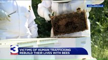 Program Helps Survivors of Human Trafficking Rebuild Their Lives by Building Bee Colonies