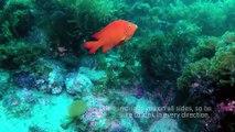 Scuba Diving Encounters: Diving Catalina Island