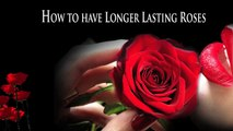 how to make a rose last forever, how to make a forever rose, how to make forever roses
