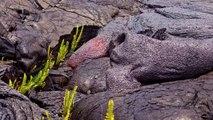 Volcano eruption   Lava Volcano erupting   Hawaii volcano   Lava lake   Lava flow  2017