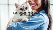 Les 10 chats préférés des Français