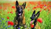 Les 10 chiens préférés des Français