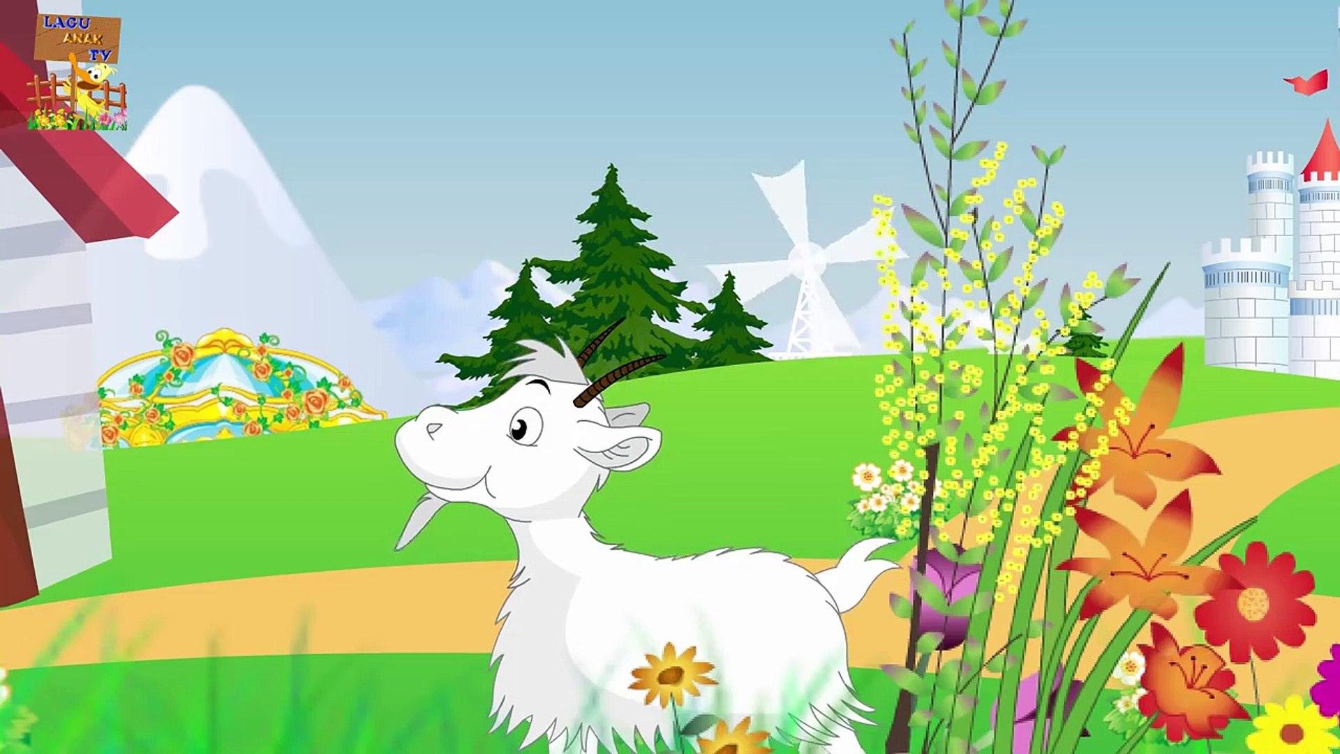 Hewan Ternak Kuda Sapi Kambing Babi Domba