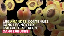 Intoxication : attention aux amandes d'abricot