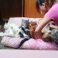 А-а-а, котиків пять, треба швидко засинать➖➖➖➖➖➖➖➖➖➖➖➖➖➖➖➖Лише відбірний український  гумор  для твого задоволення!➡️ Файний Український Гумор⬅️