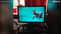 Cão enlouquece com anúncio de gato na TV