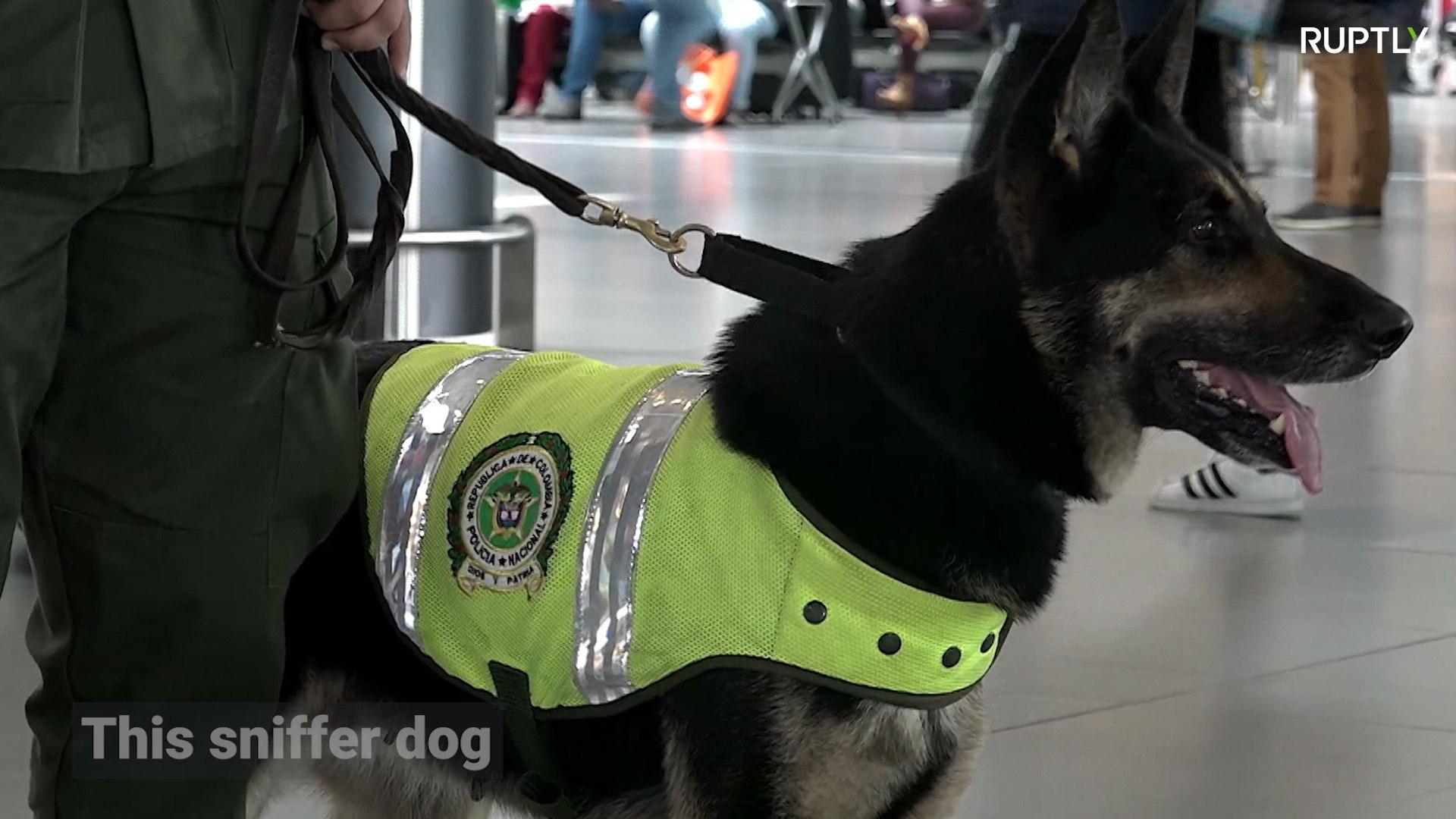 Cartel de drogas põe cabeça de cachorra farejadora a prêmio