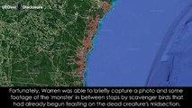 Πρωτόγνωρη επαφή και εικόνες στο διαδίκτυο ενός μυστήριου,άγνωστου ως τώρα θαλάσσιου πλάσματος στη Γεωργία....σοκάρουν!!!
