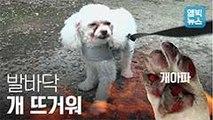 [엠빅비디오] 발바닥 개 뜨거워! 댕댕이들의 폭염 치료법