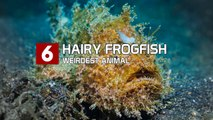 Top 10 Weirdest Animals On The Planet Earth